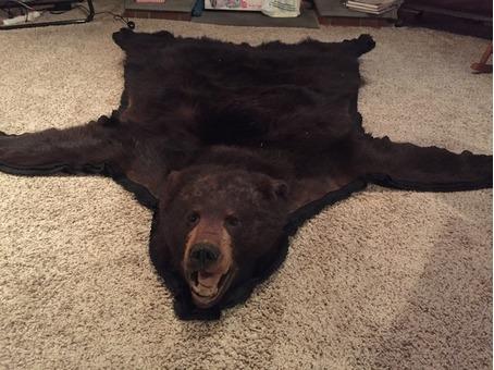 Genuine bear skin rug